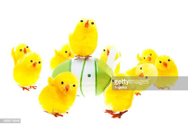 Chicks with easter egg isolated on white