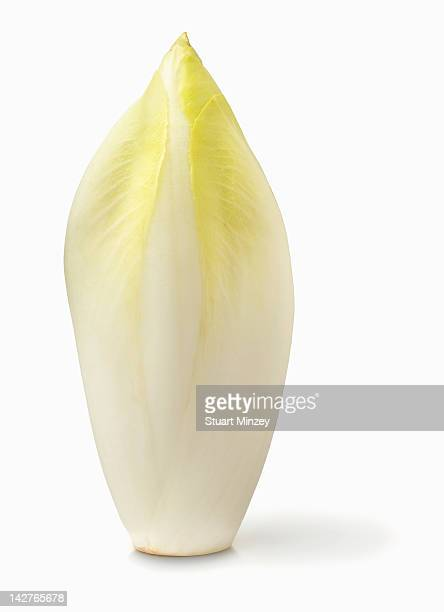 Chicory on white background