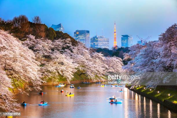 chidorgafuchi moat at night with cherry blossom, tokyo - satoyama scenery stock pictures, royalty-free photos & images