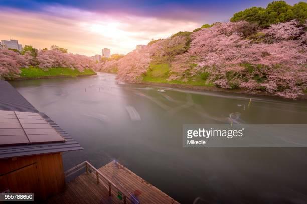 chidorigafuchi cherry blossom river - kanto region stock photos and pictures