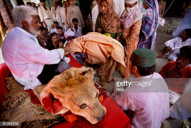 A chief of Sufi brotherhood sitting on a Lion's fur blessing his followers and disciples during mystic celebrations of Lal shahbaz Qalandar a 13th...
