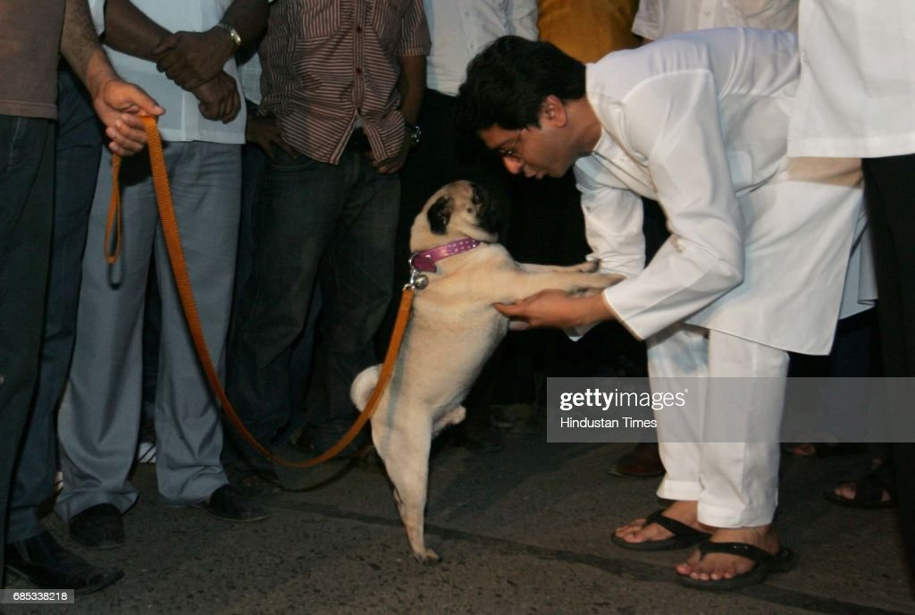 MNS chief Raj Thackeray plays with his dog while taking a walk outside his residence Krishna Kunj at Shivaji Park minutes before a meeting with the 13 MLAs who beat up MLA Abu Azmi for taking the oath in Hindi language at Vidhan Bhavan.