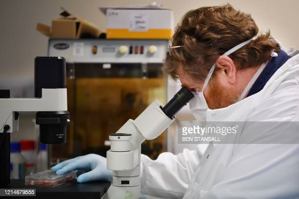 Chief Scientific Officer Dr Jeff Drew, uses a microscope to look at cells containing the novel coronavirus SARS-CoV-2 in the Stabilitech laboratory...