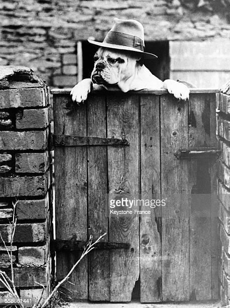 Chien coiffé du chapeau de son maître au portail de sa maison en France en 1931