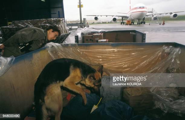 Chien des douanes antiexplosifs flairant des colis à l'aéroport de RoissyCharlesdeGaulle en 1995 France