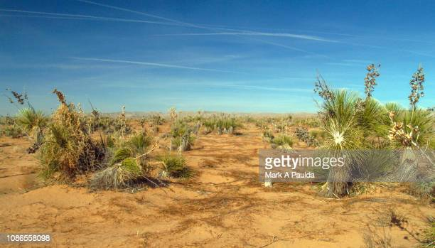chihuahua desert landscape - chihuahua desert stock pictures, royalty-free photos & images