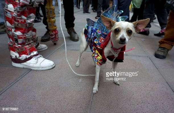 A Chihuahua dog wearing a costume made of recyclable materials is seen in Chinatown in Mexico City on February 15 2018 Members of the Chinese...