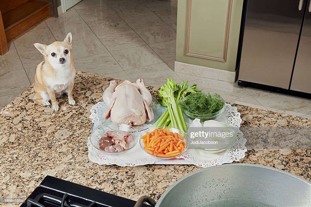 Chihuahua looking at soup ingredients : Stock Photo