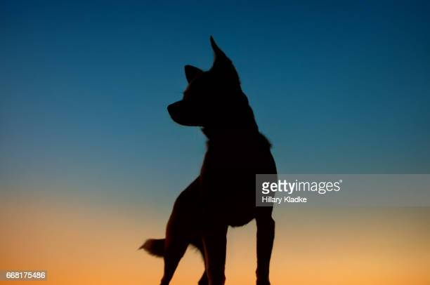 Chihuahua silhouette looking to the left