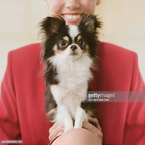 chihuahua sitting with young woman - lap dog stock pictures, royalty-free photos & images