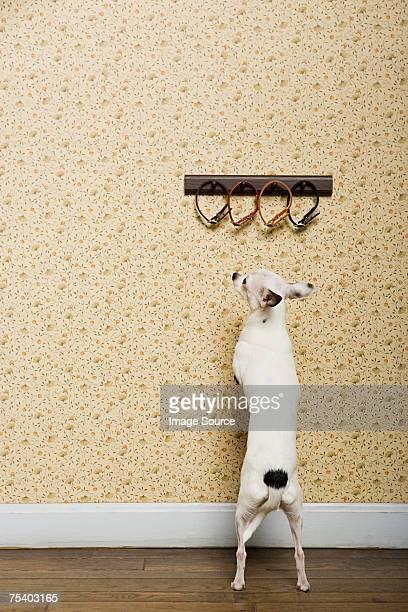 Chihuahua et cols