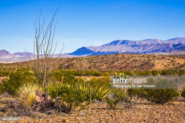 chihuahuan desert big bend national park - chisos mountains stock pictures, royalty-free photos & images