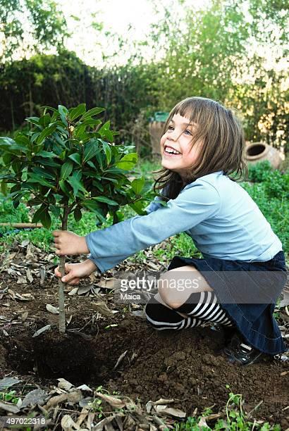 Chil plantação de árvores