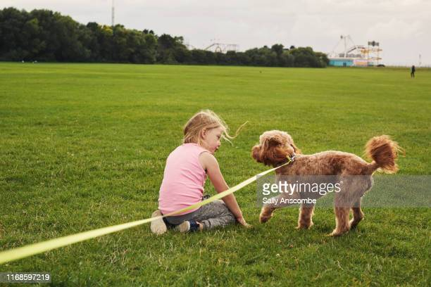 child and dog together - southport england stock pictures, royalty-free photos & images