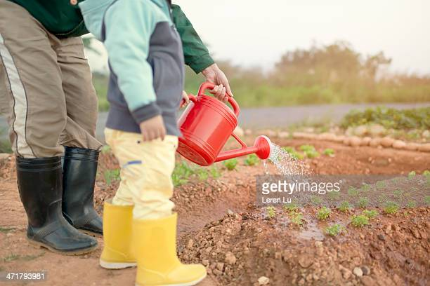 child and grandfather watering the farm - manches longues photos et images de collection
