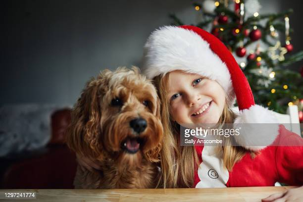 child and her pet dog at christmas time - sally anscombe stock pictures, royalty-free photos & images