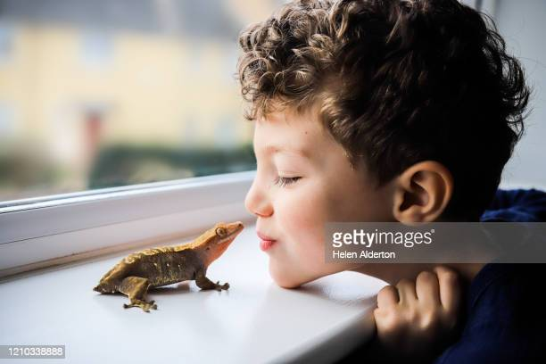 child and his pet gecko - positive emotion stock pictures, royalty-free photos & images