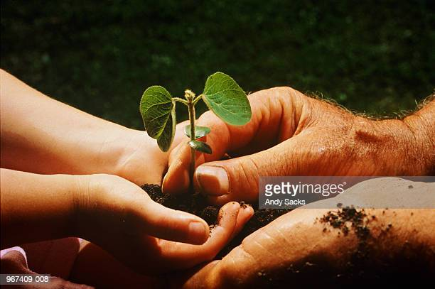 Child and man holding soya bean seedling, close-up
