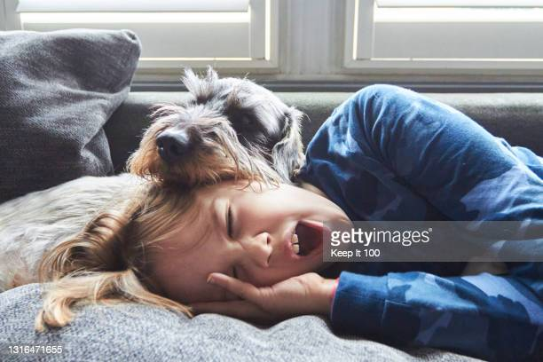 child and pet dog asleep together on the sofa at home - pets stock pictures, royalty-free photos & images
