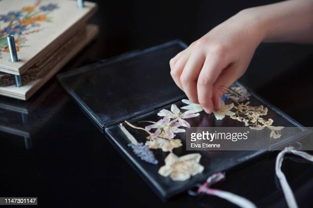 child (6-7) arranging pressed wildflowers onto a glass frame - position stock pictures, royalty-free photos & images