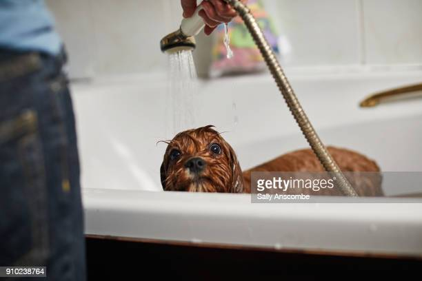 child bathing the dog - kids taking a shower stock photos and pictures