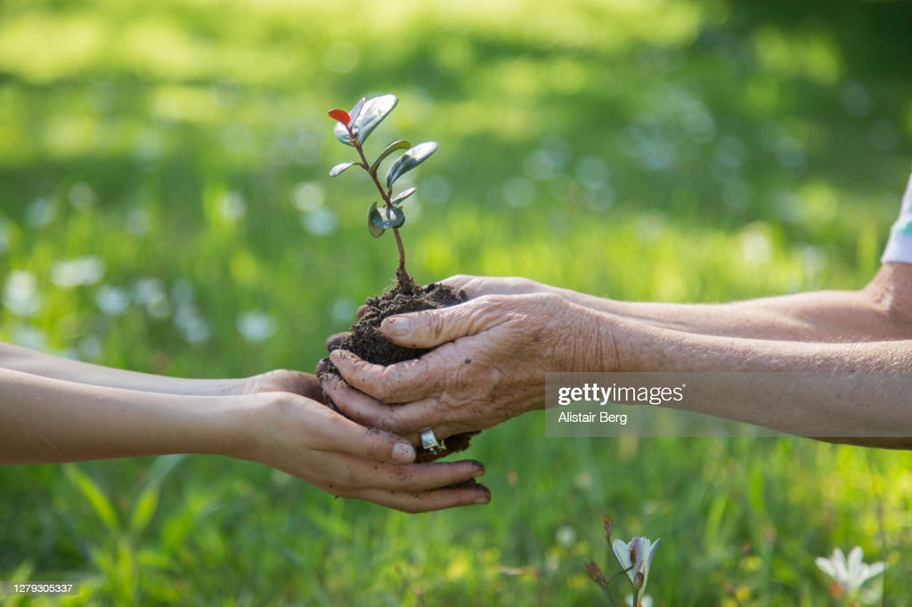 Child Being Handed A Young Tree Seedling By A Senior Woman