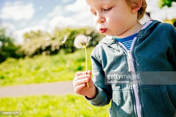 Child blowing a dandelion clock