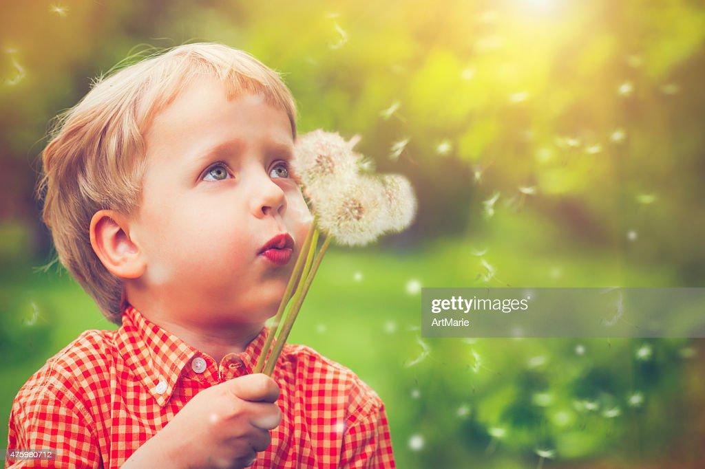 Child blowing dandelion : Stock Photo