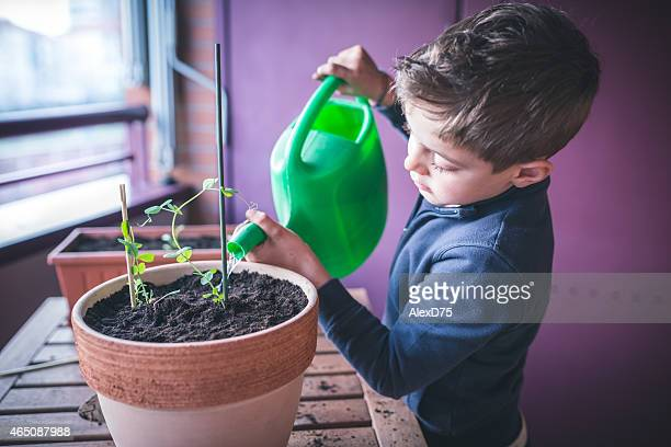 child caring plant - watering stock pictures, royalty-free photos & images