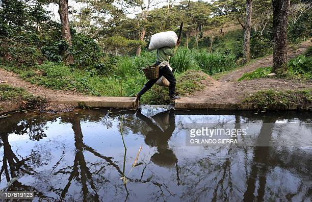 A child carries a sack of coffee beans in the department of El Paraiso 120 km east of Tegucigalpa December 20 2010 Honduras a country that hopes to...