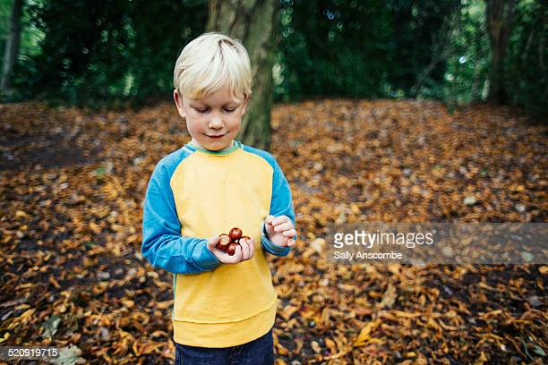 Child collecting conkers in the woods
