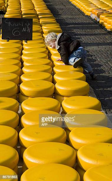 A child crawls on cheese that is displayed at the official cheese market in Alkmaar on April 3 2009 The cheese market opens every Friday until...