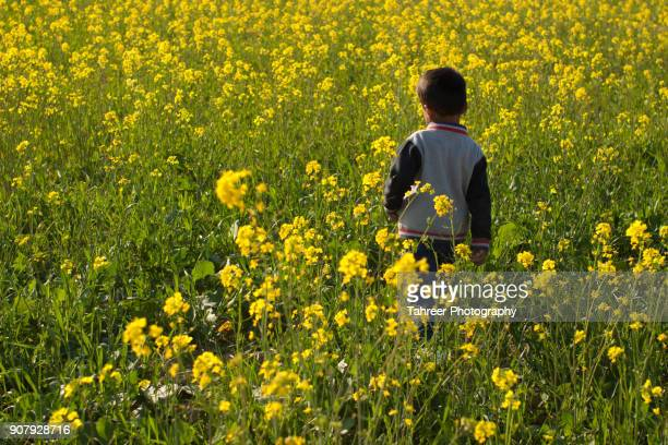 A child entering the mustard field