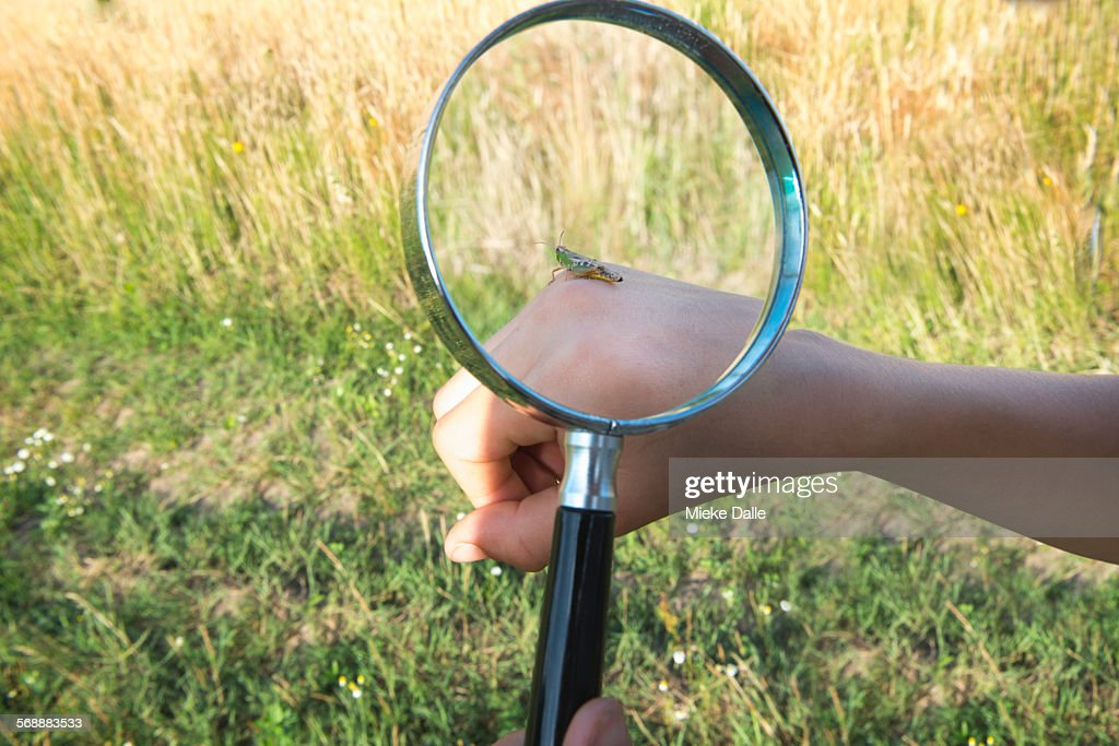 Child examining locust with magnifying glass : Stock Photo