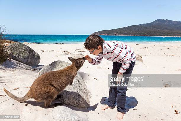 Child feeding wallaby at a beach in Australia