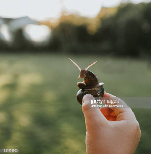 a child gently holds a snail by its shell - hand stock pictures, royalty-free photos & images