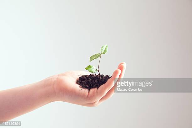 Child hand holding seedling, side view