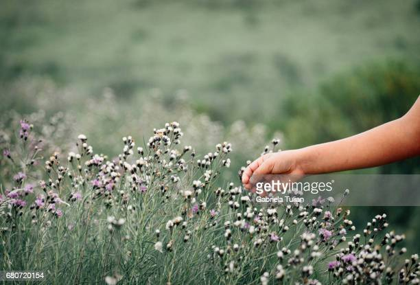 Child hand touching the beautiful purple and white flowers