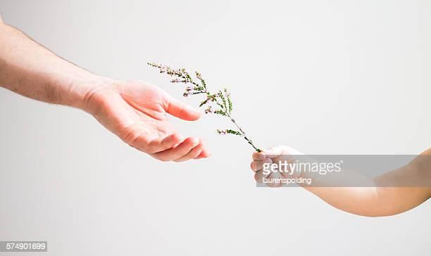 child handing flower to an adult - oferecer imagens e fotografias de stock