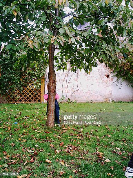child hiding behind tree in yard - behind stock pictures, royalty-free photos & images