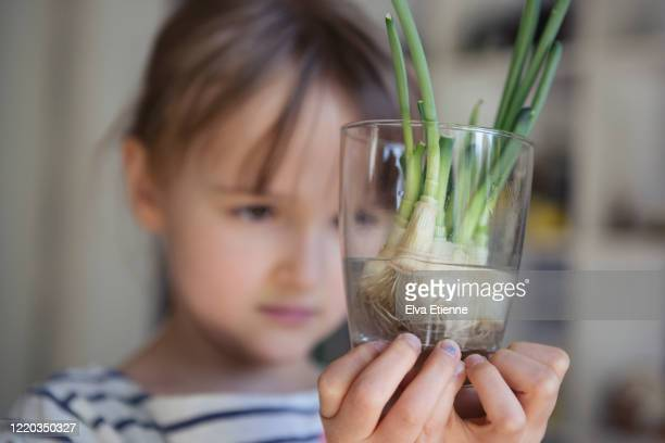 child holding a glass full of spring onions regrowing shoots from leftover roots - cipollina foto e immagini stock