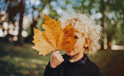 Child holding a huge leaf - gettyimageskorea