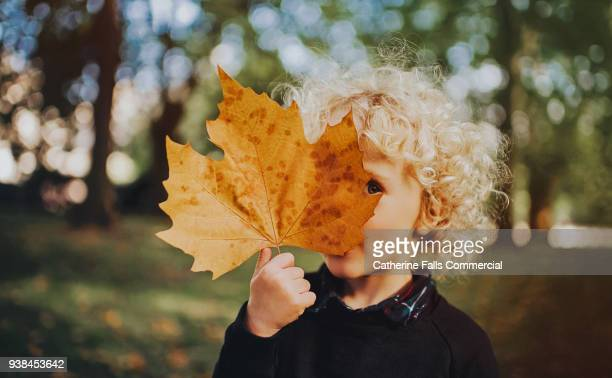 child holding a huge leaf - september stock-fotos und bilder