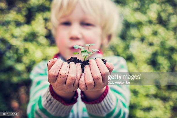 Child holding a plant shoot in his hands