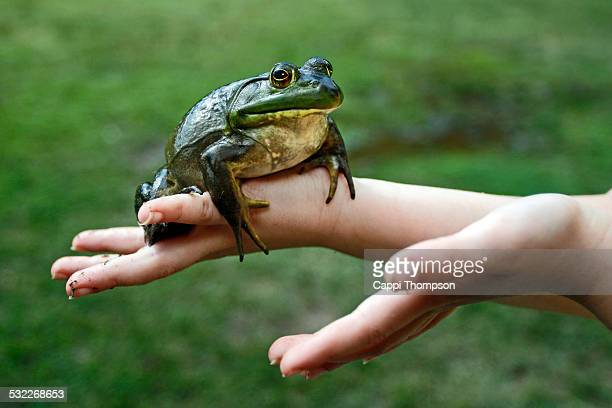 child holding bull frog - bullfrog stock pictures, royalty-free photos & images