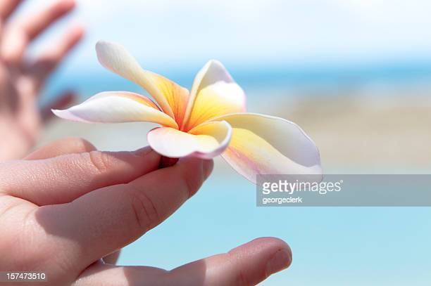 child holding frangipani flower - innocence stock pictures, royalty-free photos & images