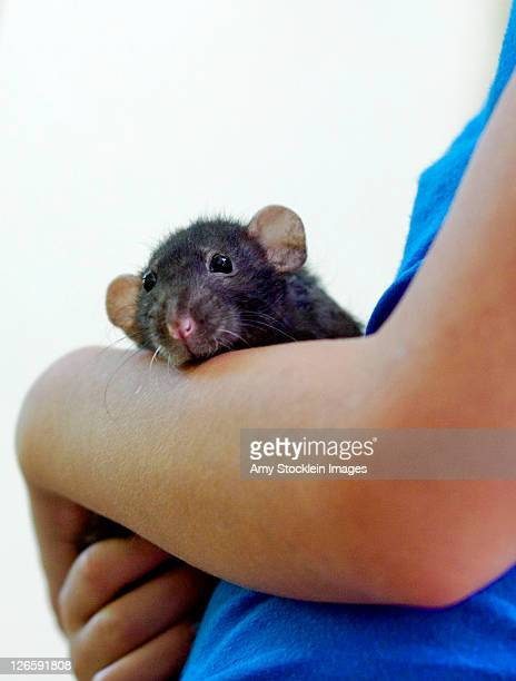 child holding rat in hand - hairy little girls stock photos and pictures