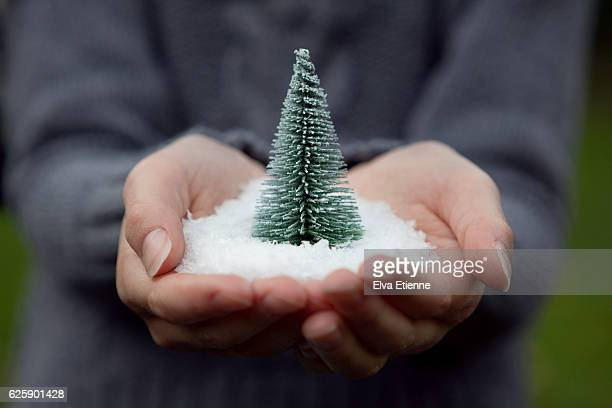 Child holding snow and Christmas tree in hands