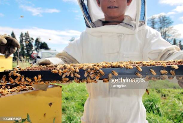 child in a bee suit with beehives - beehive new zealand stock pictures, royalty-free photos & images