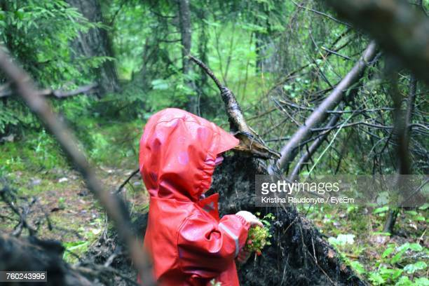 Child In Raincoat Holding Plants At Forest